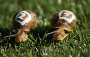 snails-1753611_1920